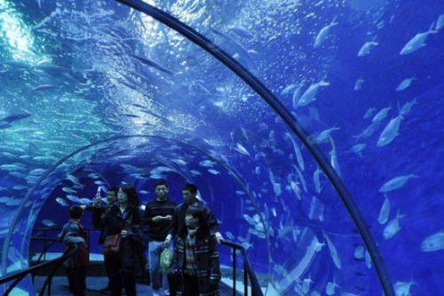 """""""鲨鱼海湾""""在内4种不同海洋风情,长155米,也是世界上最长的海底隧道."""