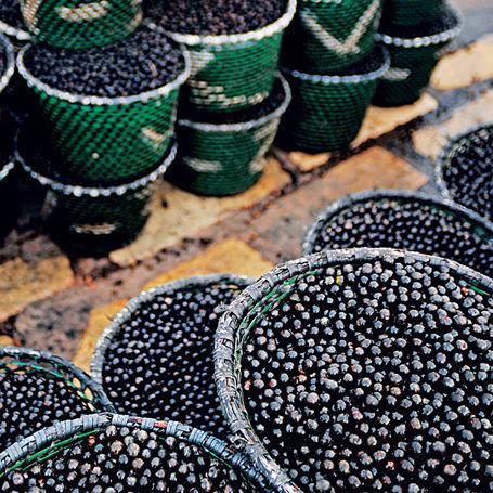 美食 巴西/巴西人吃阿萨伊的方式有两种,一种是压榨成纯果汁来喝,另一种...