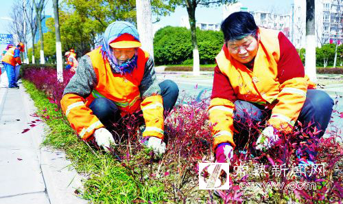 苗木养护期定义