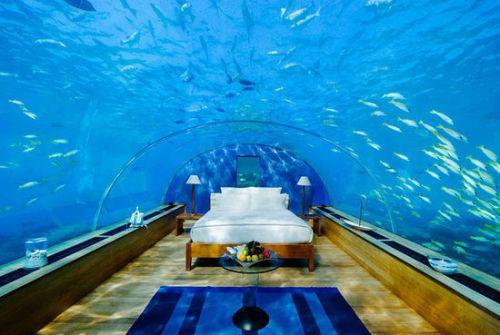 壁纸 海底 海底世界 海洋馆 水族馆 桌面 500_335