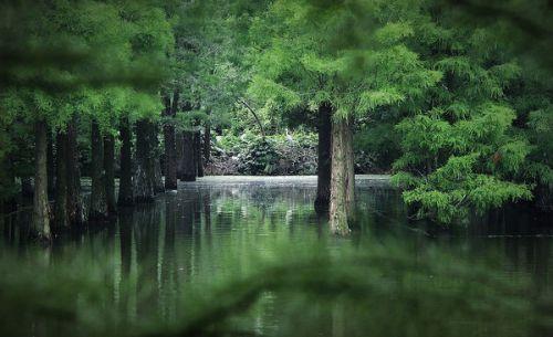 李中水上森林位于兴沙公路舜生桥附近