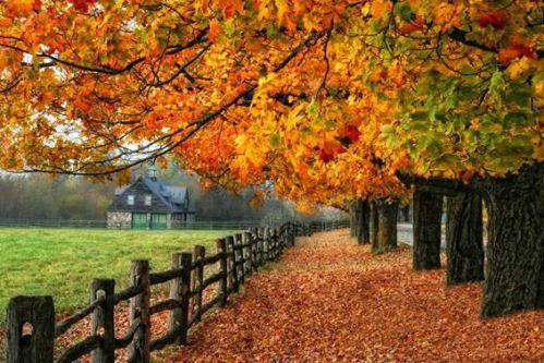 秋天因五彩斑斓的枫叶而分外美丽,一进入秋季,那一片片,一簇簇的枫树