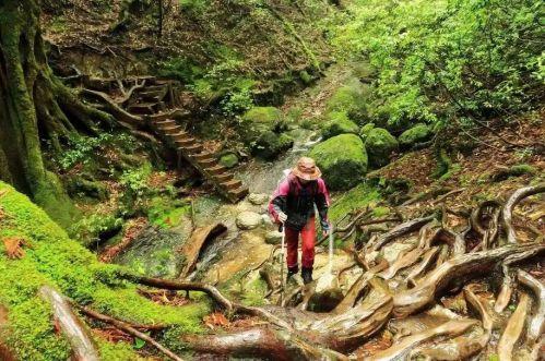 幽灵公主森林场景分享展示