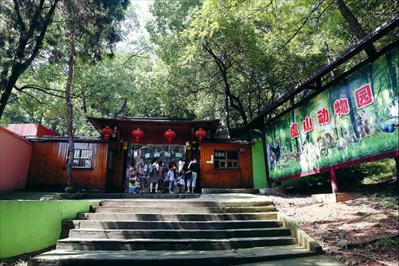 两只东北虎宝宝亮相虞山动物园_原创_新闻_常熟新闻网