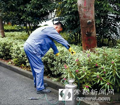 白蚁蛀空小区树木部门前往灭治