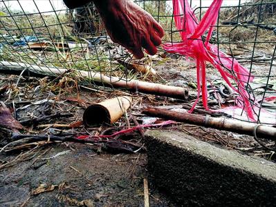 鸡舍外围防护网上留着豹猫扒开的洞