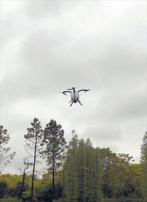 """图:外表酷似鸡蛋的""""小巨蛋""""无人机在空中飞行。"""