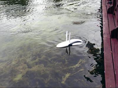 """图:""""小海豚""""伴着水花快速前行。"""