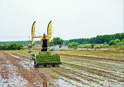 图:新型智能无人驾驶插秧机正在进行移栽作业。
