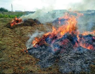 小图:22日上午,燃烧的秸秆堆。